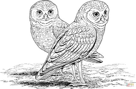 Coloring Owl by Burrowing Owl Coloring Page Free Printable Coloring Pages