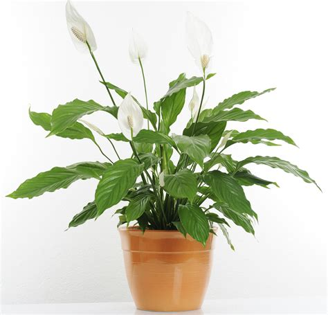 Keep Your Indoor Plants Happy And Healthy