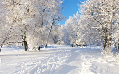 Free Winter Picture by Winter Wallpapers High Quality Free