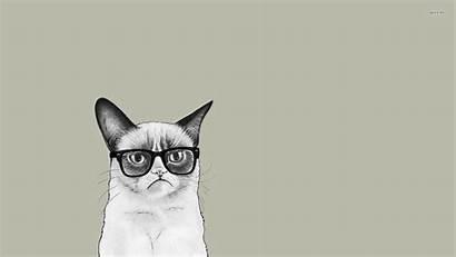 Cat Grumpy Glasses Cool Cartoon Wallpapers Meme