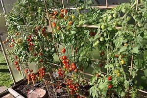 Tomaten Rankhilfe Selber Bauen : urlaubsbew sserung selber bauen native plants gartenblog ~ A.2002-acura-tl-radio.info Haus und Dekorationen