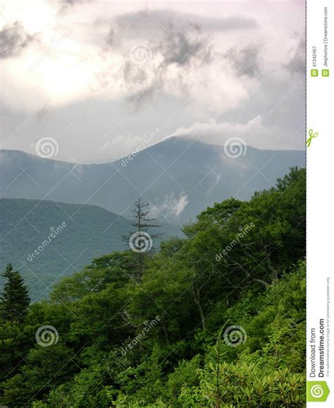 High Mountains Fog And Pine Royalty-free Stock Photo