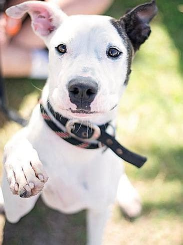 animal welfare league queensland rehomed  cats  dogs
