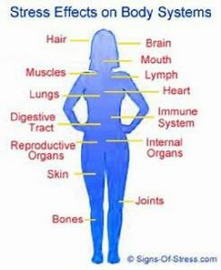 Effect Of Stress On Body Systems