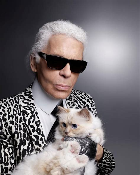 karl lagerfeld cat love cats kittens animals cats