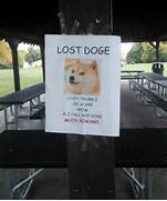 Lost Doge Meme Original Images Pictures