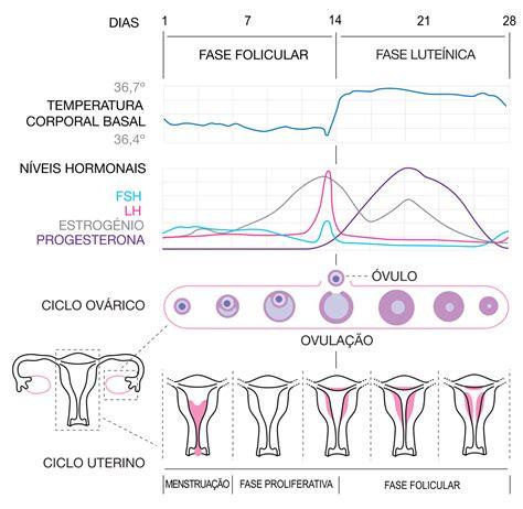 changing table pad ciclo menstrual wikipédia a enciclopédia livre
