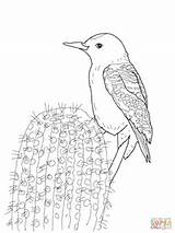 Woodpecker Gila Coloring Woodpeckers Printable Supercoloring Sketch Template Credit Larger sketch template