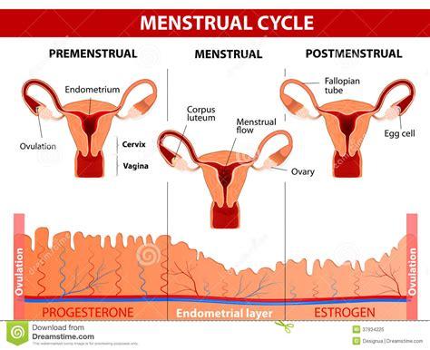 Menstrual Problemshealth Faqs Health Benefits Txtmyt