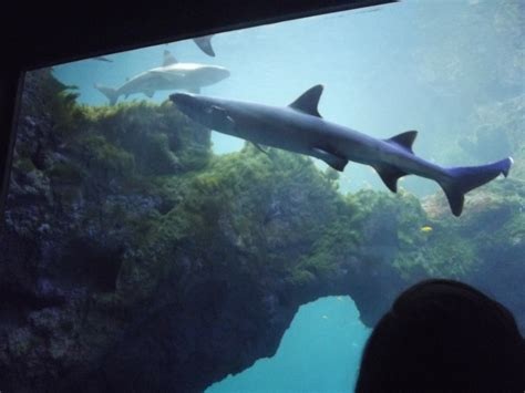 prix aquarium de lyon visite de l aquarium de lyon