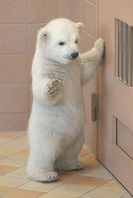 pictures  cute baby animals  postcard worthy cuties
