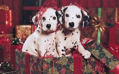 Puppy Christmas Wallpapers Computer Puppies Desktop Animal