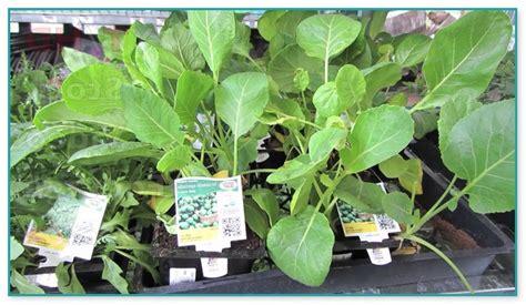 japanese garden plants for sale