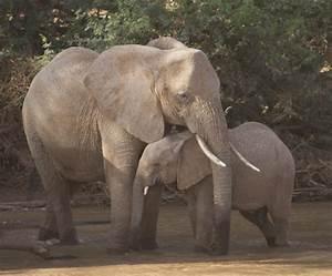 African Safaris by Michael Fairchild Photography