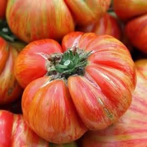 petunia flowers australian seed tomato hillbilly