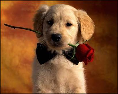 Dog Wallpapers Dogs Puppy Cutest Romantic Boy