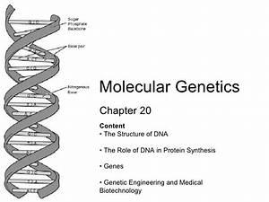 Chapter 20 Molecular Genetics Lesson 1