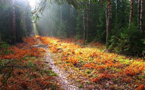 landscape fall trees path wallpapers hd desktop  mobile backgrounds