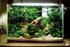 Pflanzen Terrarium Einrichten : nature aquarium vancouver pflanzen aquarium aquarium terrarium und aquarium deko ~ Watch28wear.com Haus und Dekorationen