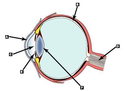 Eye Diagram For Quiz by Human Eye Anatomy Quiz