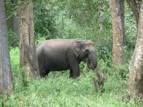 Indian Forest Animals