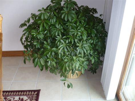 plantes de bureau sans soleil ombre peu d 39 entretien plantes d 39 intérieur increvables