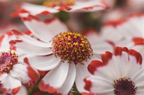 Una occasione perfetta è il compleanno: Petali bianchi di fiori con centro viola | Foto Gratis