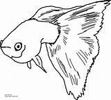 Guppy Fish Coloring Fancy Drawing Printable Pages Guppies Draw Template Own sketch template