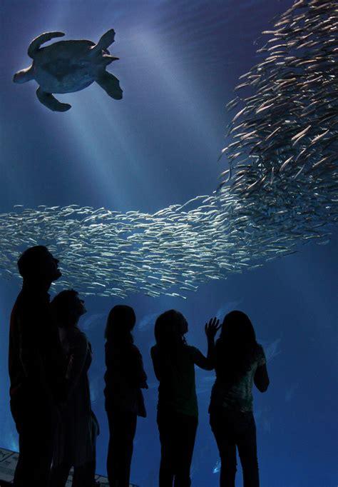 small talk monterey bay aquarium