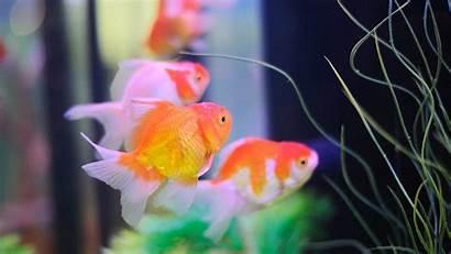 Fish Aquarium Koi Keep Windows Tank Care