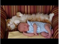 Katzen Treffen Neugeborene zum ersten mal Videoerstellung
