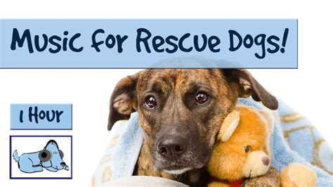 rescue centres  dog kennels soothing