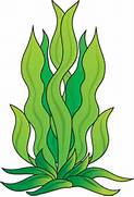 Cartoon Sea Plants