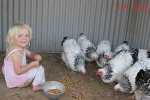 Backyard Poultry By Andy Vardy Rachael Edwards