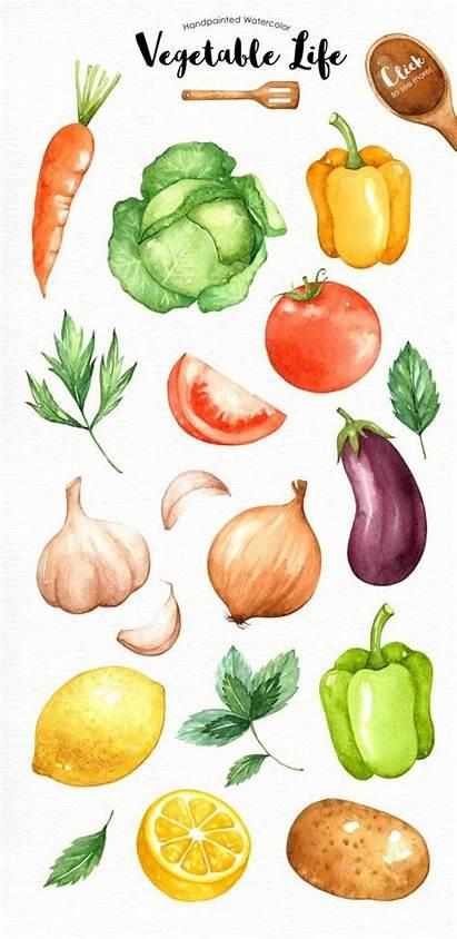 Watercolor Clipart Vegetables Vegetable Veggie Veggies Culinary