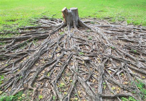 How To Kill Stumps And Roots Ebay