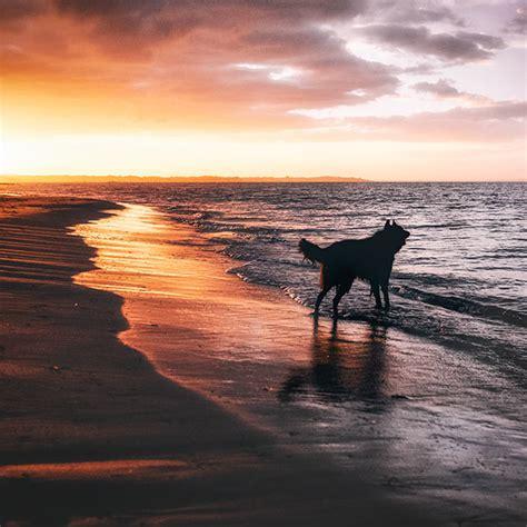 WolfCub and Phoenix | wolf shadow photography | fine art