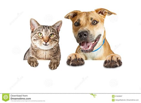 Happy Wallpaper Cats And Dogs by Happy Cat And White Banner Stock Image Image Of