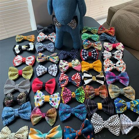ties bow shelter help stylish dogs cats makes them adopted animals forever brown darius paws bowties boy cute animal he