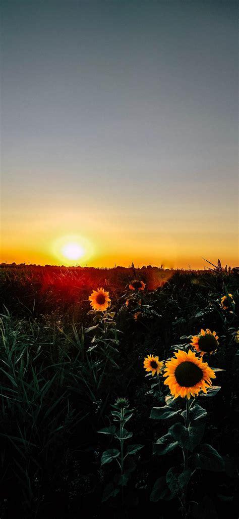 Sunrise Phone Wallpaper 1080x2340 045