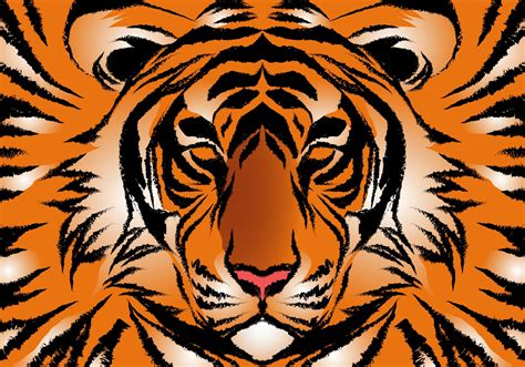 striped bengal tiger vector   vectors