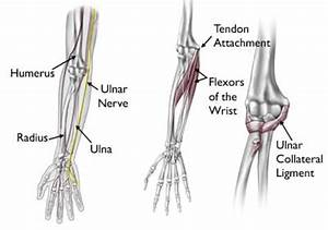Elbow Injuries In The Throwing Athlete - Orthoinfo