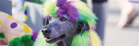 21st Annual Mardi Gras Pet Parade