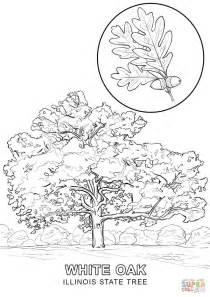 Maryland State Tree Coloring Page