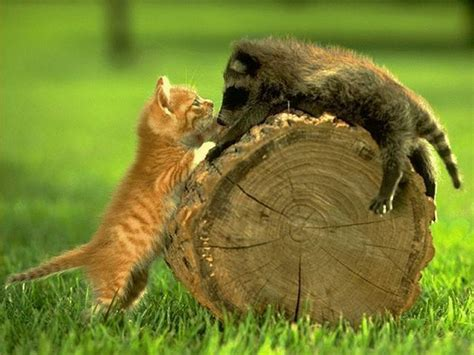 cute animals   Dusky's Wonders