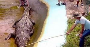 Man Eating Super Crocodile | www.imgarcade.com - Online ...