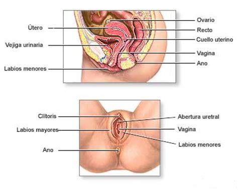 Gambar Rahim Wanita Yang Normal Imágenes Del Sistema Reproductor Femenino Telemedicina