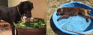 tips keep your pets hydrated summer