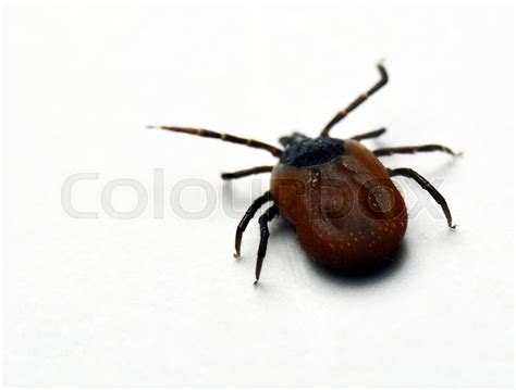 Tick Shot On White Paper, While Running Away.
