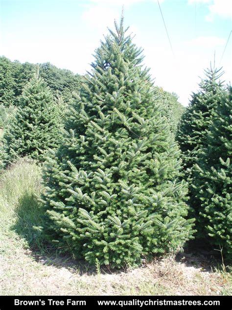 buy a real tree